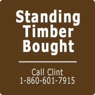 standing timber bought connecticut logging